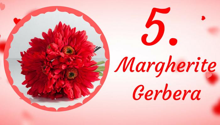 Margherite Gerbera