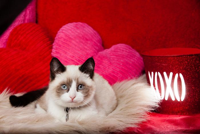 Per il San Valentino amante del gatto