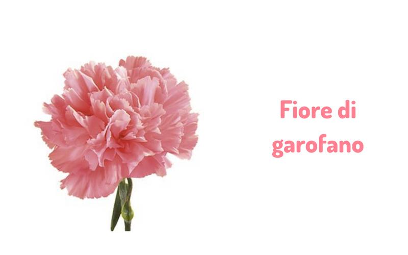 Fiore di Garofano
