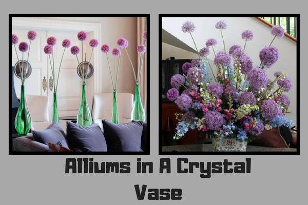 Alliums in A Crystal Vase