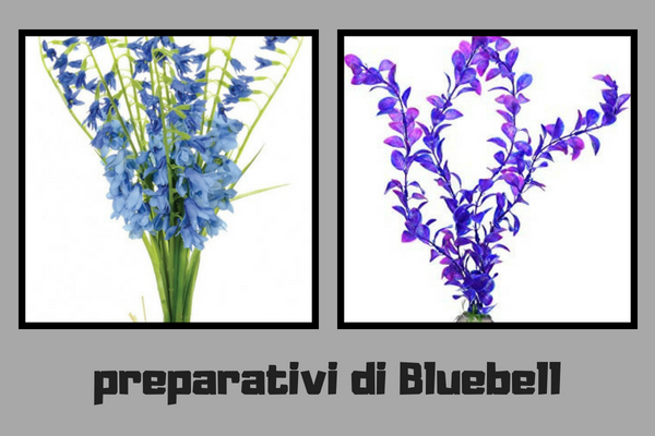Preparativi di Bluebell