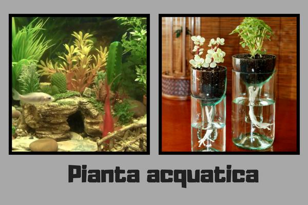 Pianta Acquatica