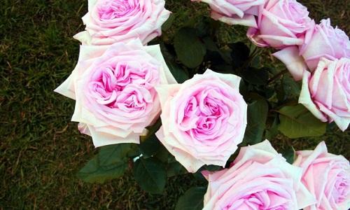 Scrivi l'affermazione ancora una volta con i fiori dell'anniversario