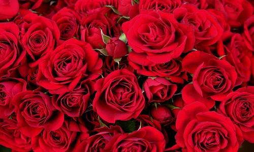 Rose rosse per la donna romantic