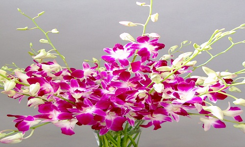 5) Orchidee