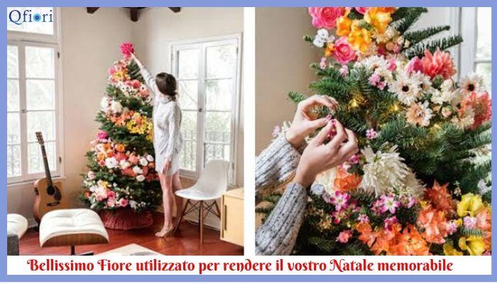 Bellissimo Fiore utilizzato per rendere il vostro Natale memorabile