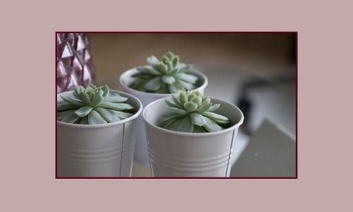 1. Succulente