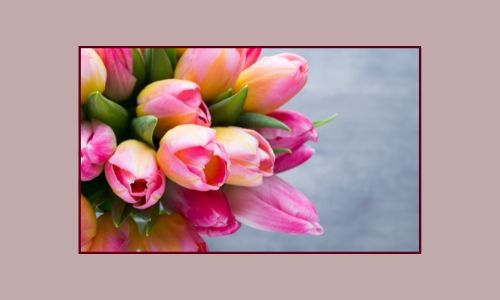 3. Tulipani