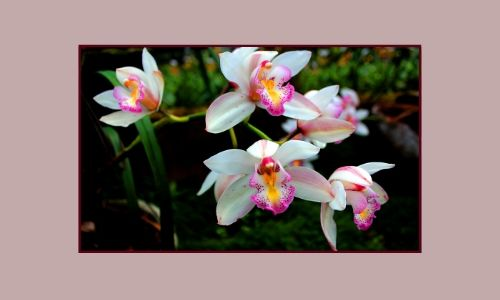 4. Orchidee