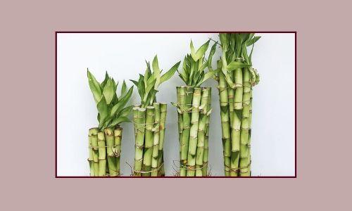 7. Bamboo