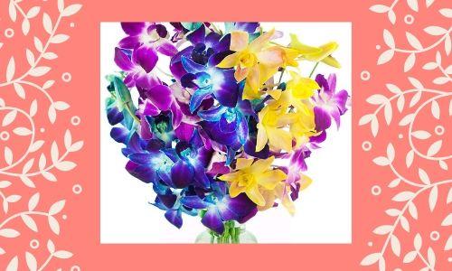 4) Orchidea