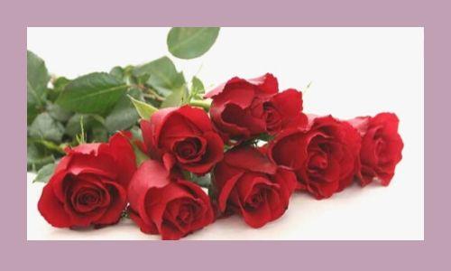 5) Sette rose rosse