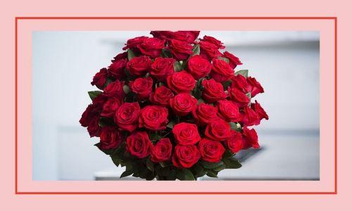 2) Rose rosse