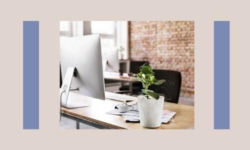 2. Piante da scrivania