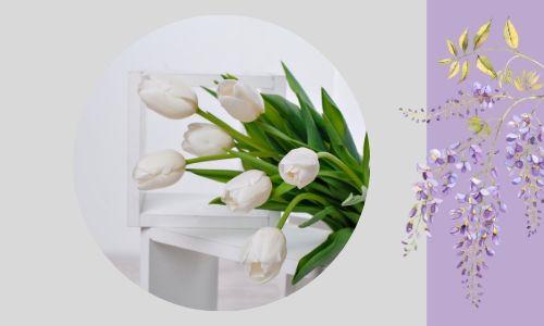 1. Eleganti tulipani bianchi