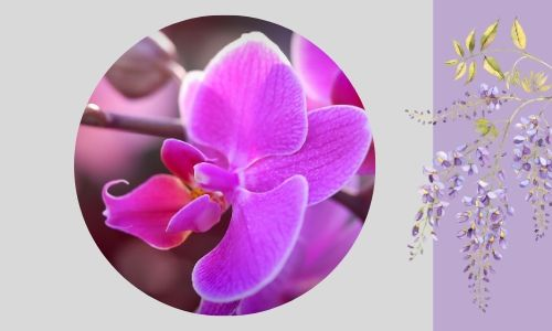 6. Orchidee speciali
