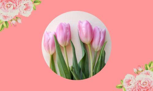 2. Tulipani eleganti