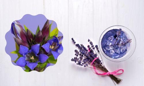 7. Fiore di genziana