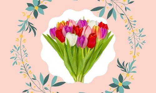7. Tulipani