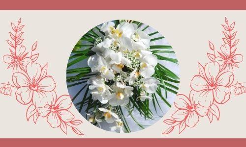 6. Orchidea