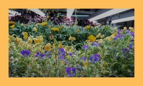 2. Giardino fiorito commestibile speciale