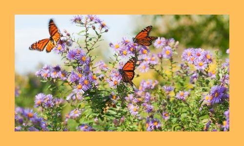 7. Giardino fiorito delle farfalle