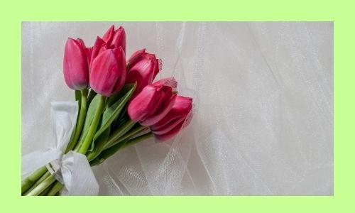 3) Tulipani