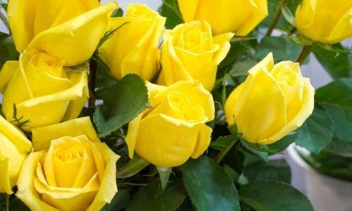 1. Rose gialle