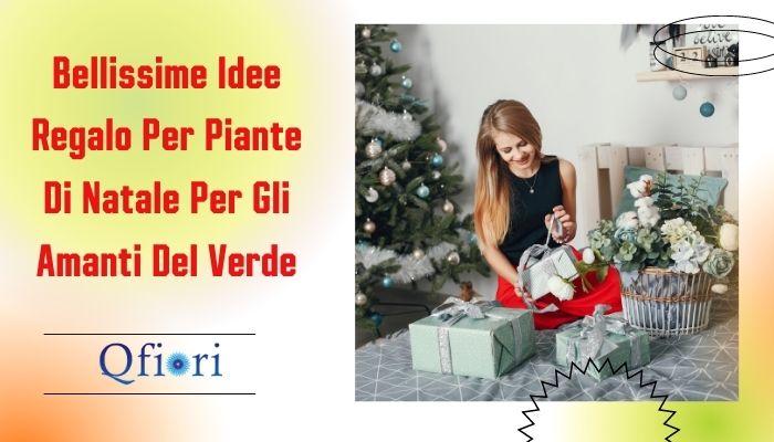 Bellissime Idee Regalo Per Piante Di Natale Per Gli Amanti Del Verde
