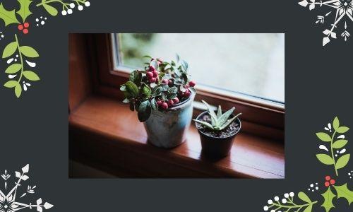 5. Winterberry