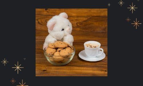 2) Biscotti al cioccolato e combo orsacchiotto