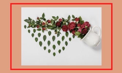 4. Disposizione della tazza delle rose adorabili