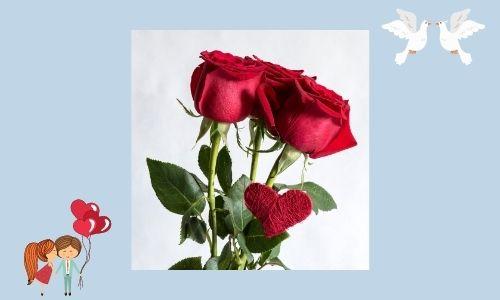 5. Anniversario Rosa