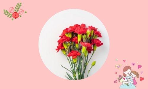 3. Ti ammiro - garofano rosso
