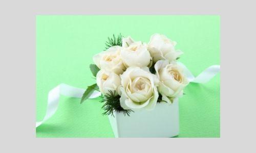 2) Bellissimi fiori