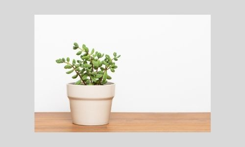 3) Mini piante