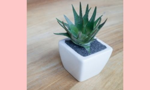 4. Mini pianta