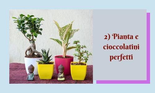 2) Pianta e cioccolatini perfetti